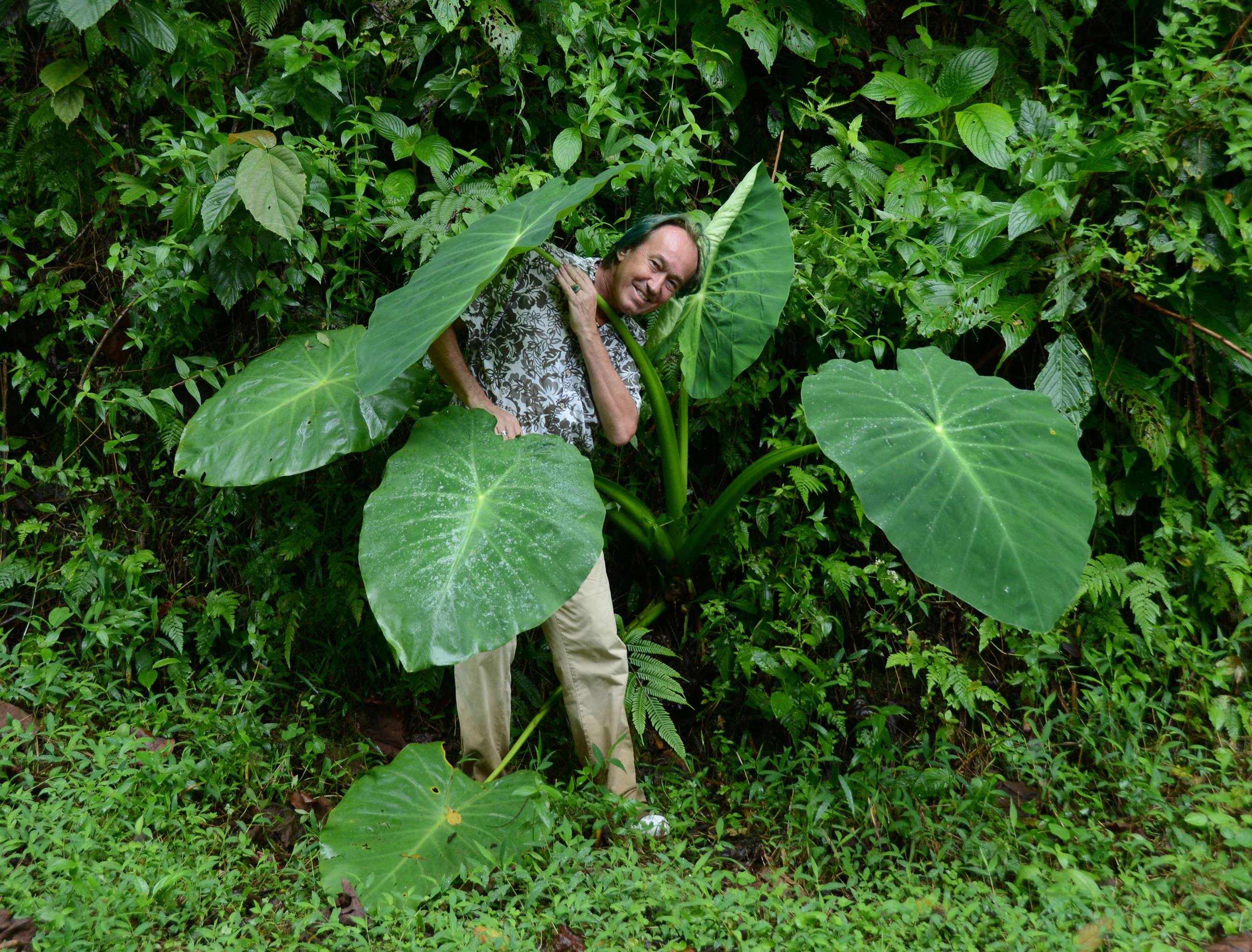 Petit Poucet vert ou plante géante ?