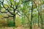 Le chêne sessile, la deuxième essence forestière de France, pourrait disparaître des territoires les plus méridionaux d'ici cinquante ans.