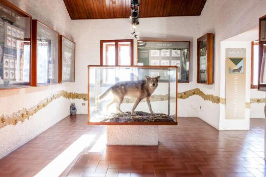 Le musée de Civitella Alfedana, consacré au loup.
