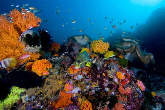 Les récifs coralliens des îles Raja Ampat photographiés par l'Union internatinale de la protection de la nature, le 19 juin 2012.