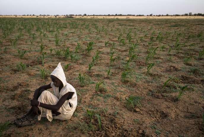 Près du village de Donaye, un jeune Mauritanien dans un champ de mil, en décembre 2016.