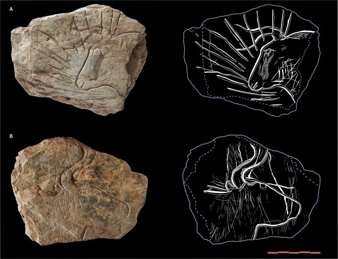 Tablette gravée ornée sur chaque face d'une tête d'auroch, trouvée près de Plougastel-Daoulas (Finistère), datant de 14000ans.