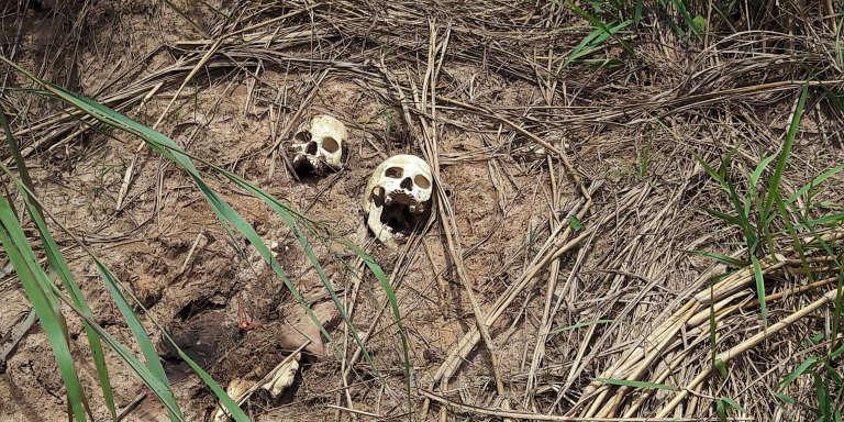 Photo prise le 12 mars 2017, de crânes humains sur une fosse commune découverte par les habitants de Tshimbulu, dans le centre de la République démocratique du Congo.