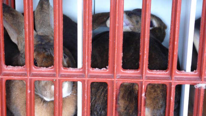 Il convient de protéger les enfants des images de maltraitance dans les abattoirs.