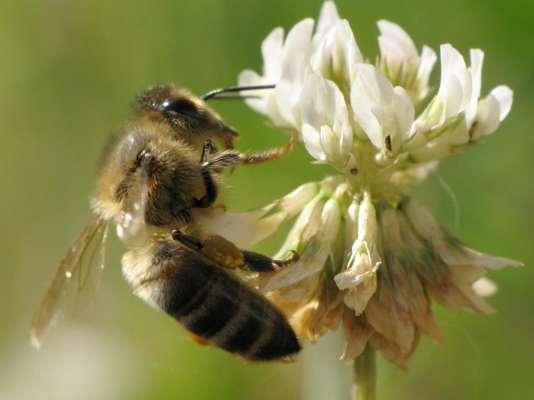 L'Union nationale de l'apiculture française accuse le ministère de cacher les dégâts des pesticides sur les ruches.