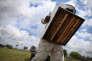Un rucher en Floride, en 2013.