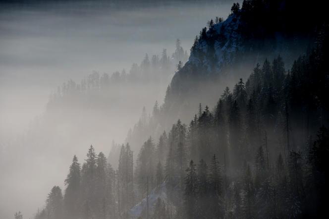 La forêt des Vosges, près de Gérardmer, en janvier.