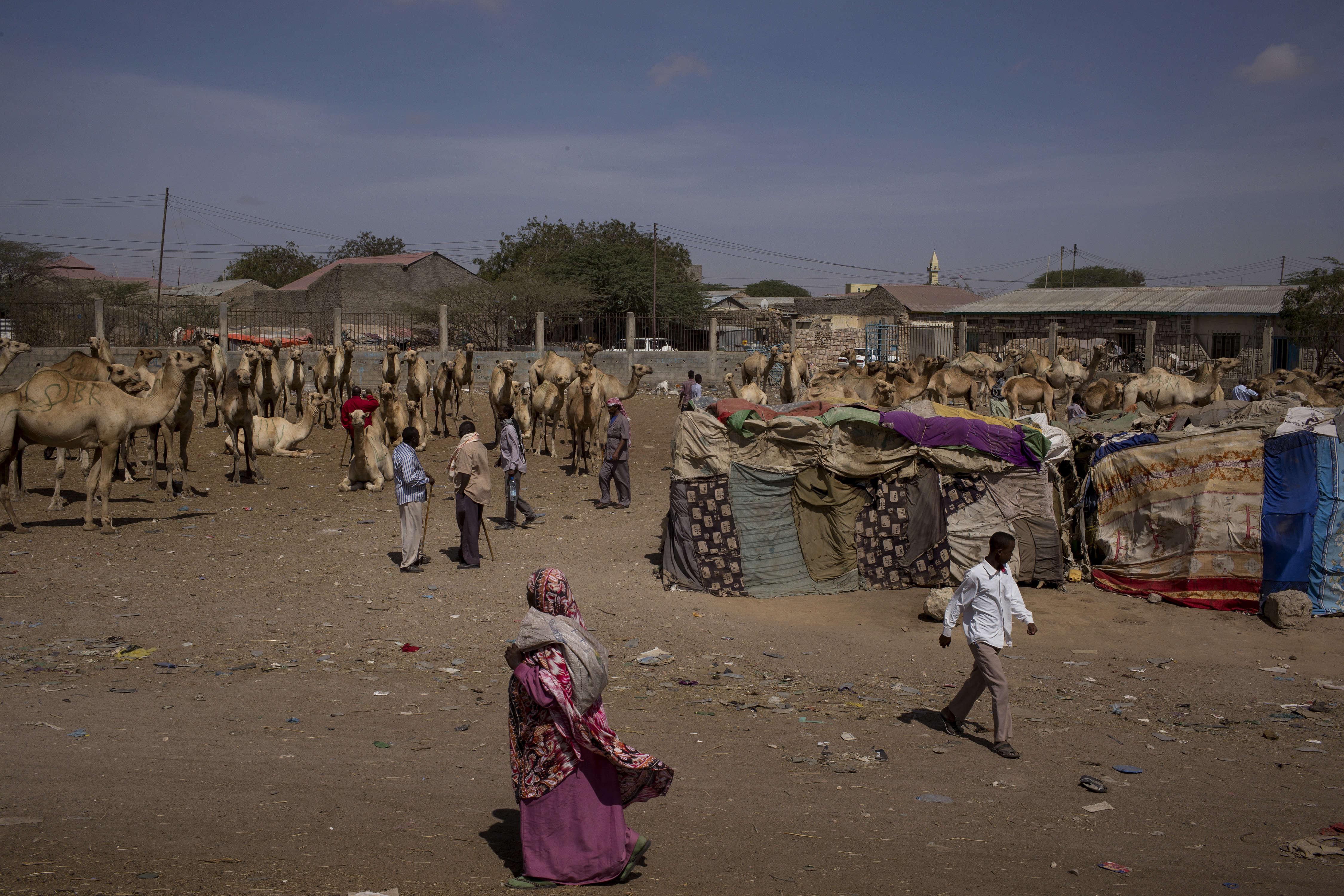 Sur le marché de Hargeisa, le 25 mars. La sécheresse a entraîné une diminution du bétail disponible.