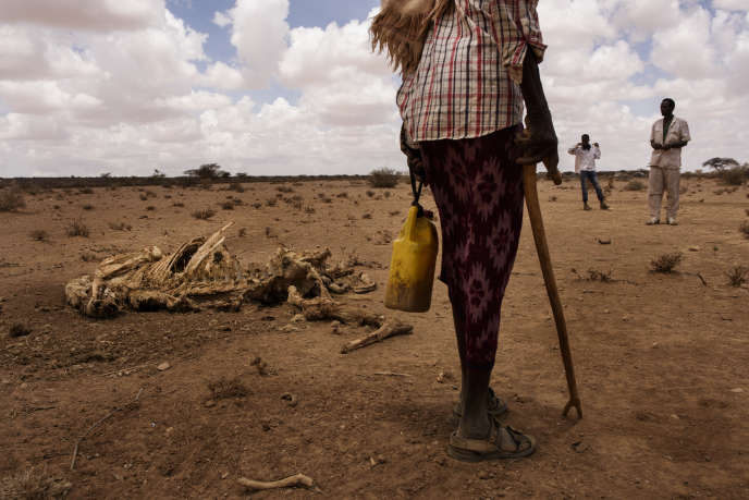 Un homme passe devant la carcasse d'un de ses chameaux près du village de Xidh Xidh, dans leSomaliland, le 22 mars.