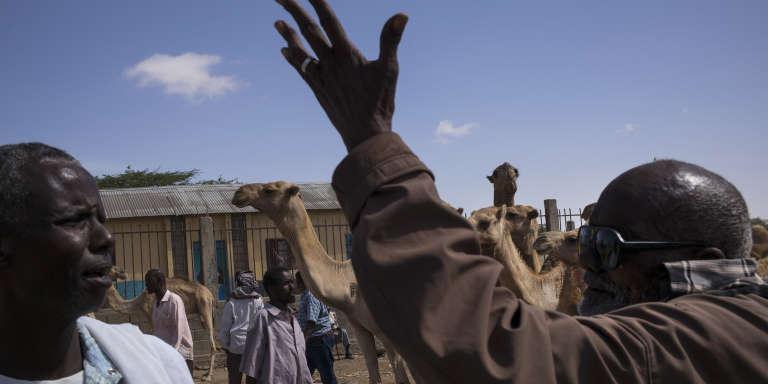 Des chameaux et des chèvres sont à vendre sur le marché au bétail d'Hargeisa (deuxième plus grande ville de Somalie). La sécheresse à provoqué un ralentissement des échanges et une baisse des prix des bêtes.