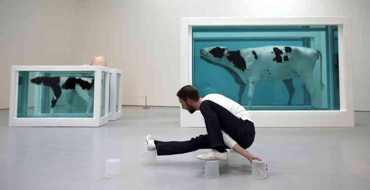Le danseur Matthias Sperling lors d'une performance devant «Mother and Child Divided», la vache et son veau coupés en deux et qui fit connaître Damien Hirst, au monde entier en 1993.