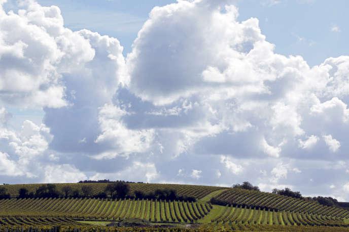 Vignes à Camblanes-et-Meynac, près de Bordeaux.