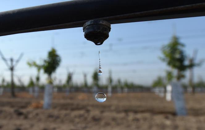 Des vignes destinées à produire des raisins de table sont arrosées au goutte-à-goutte, à Porterville, en Californie, en août 2016.