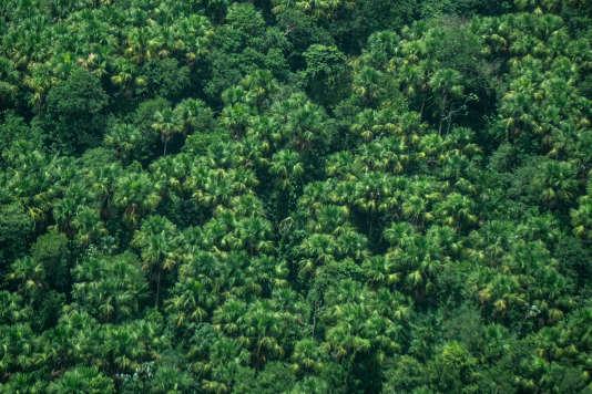 Vue aérienne de la mangrove de l'Oyapock.