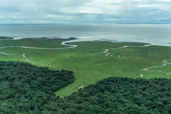 L'estuaire de l'Amazone, composé de mangroves, de forêts et de prairies, à proximité des récifs corallienstout juste découverts et déjà menacés.