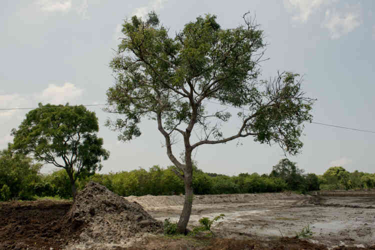 Un bassin d'élevagede crevettes à sec avant le début de la saison des pluies. La croissance économique mondiale des dernières décennies s'est accompagnée d'une hausse de la consommation de crevettes, incitant à détruire les mangroves pour y développer des fermes d'élevage intensif.