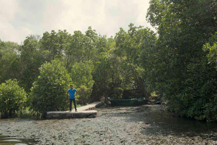 La jetée de Sudeesa. Cette organisation citoyenneespère garantir la survie des 8 800 hectares de mangrove subsistant au Sri Lanka et replanter en cinq années 3 900 hectares passés à la machette.