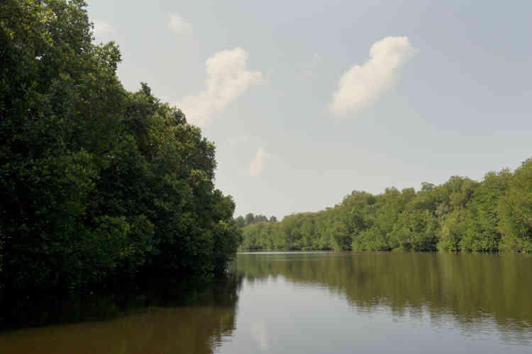 La mangrove de Chilaw, dans l'ouest du Sri Lanka. Ayant pris conscience de ses multiples vertus, l'îleespère sauver cette zone tampon entre l'océan et les terres.