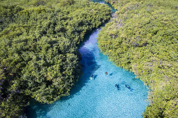 Entre Playa del Carmen et Tulum, le« Casa Cenote» d'eau salée serpente dans la mangrove, tout près de la mer.