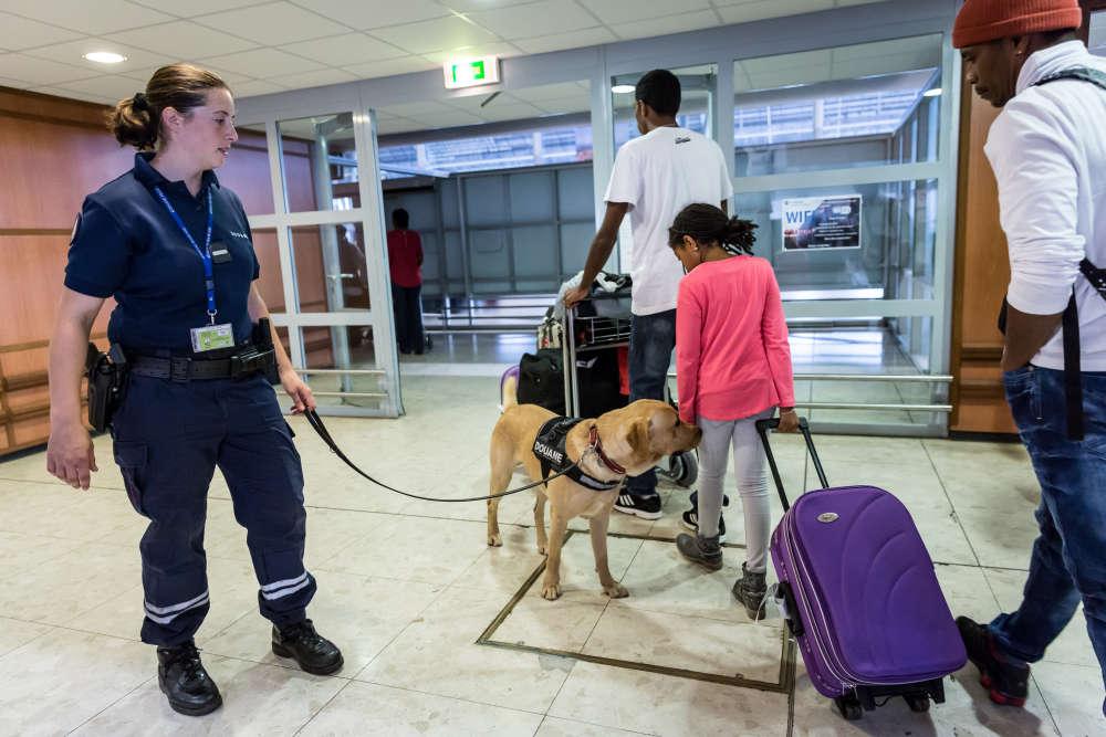 La douane observe l'arrivée des passagers à l'aéroport de Cayenne. Un chien spécialisé dans la recherche de stupéfiants circule parmi les voyageurs et renifle les bagages.