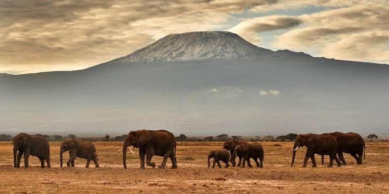 Dans le parc national d'Amboseli, au Kenya, en 2016.