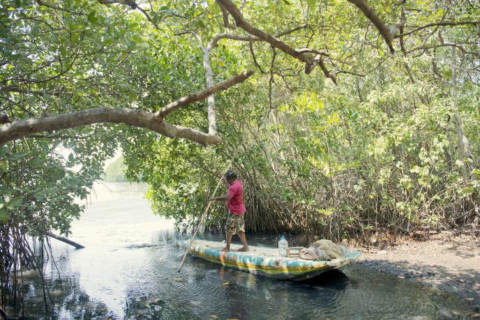 Dans la mangrove, près de Chilaw, au Sri Lanka, fin mars.