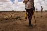 Près du village deXidh Xidh(Somaliland), en mars.