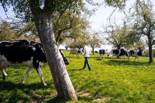 Timothée Herman, jeune producteur laitier à Rânes (Orne), installé avec ses parents.