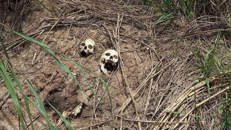 Des crânes humains retrouvés dans une fosse commune découverte à Tshimaiya, dans le Kasaï-Central, en République démocratique du COngo, en mars 2017.