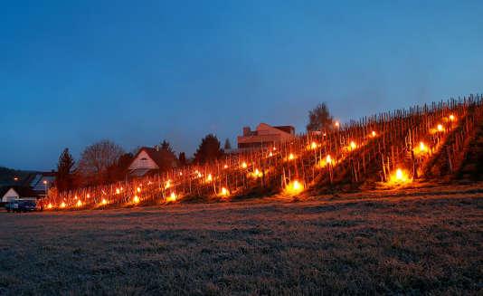 Certains viticulteurs utilisent des bougies de paraffine pour protéger leurs pieds de vigne du gel.
