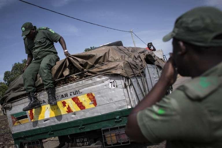 Des membres de la police forestière du Mozambique ont arrêté un camion dans la banlieue de Pemba, au nord, et cherchent du bois coupé illégalement.
