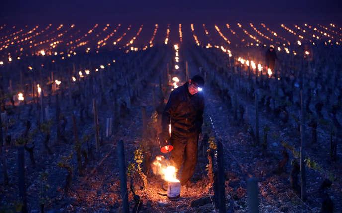 Les viticulteurs allument des braséros dans leurs parcelles pour lutter contre le gel dans le chablisien fin avril.
