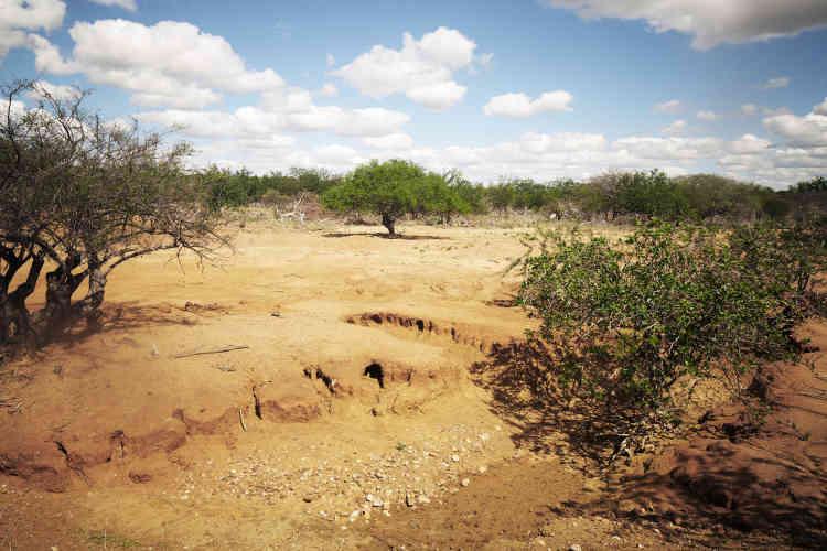 Partout dans la région, le paysage est marqué par la sécheresse.