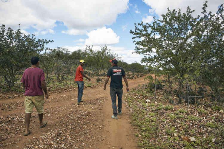 Des travailleurs agricoles à Dormentes. Une fois les réserves de maïs épuisées, les fermiers utilisent le maquis et brûlent même le mandacaru (cactus) pour l'utiliser comme fourrage.
