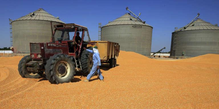 A 80 km du Caire, silos à blé.