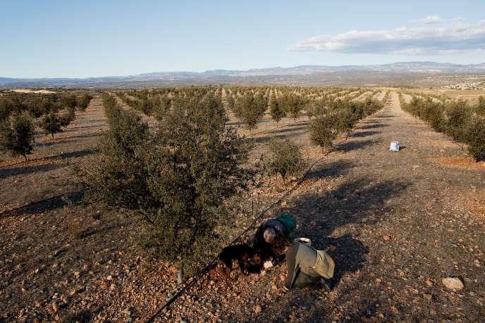 Une truffière à Sarrion, dans la province espagnole de Teruel, en février 2016.