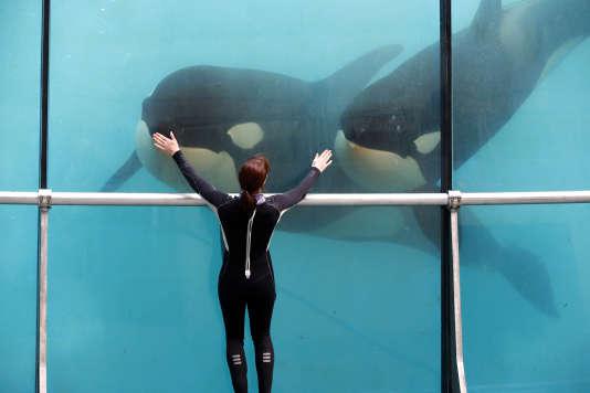 Des orques au Marineland d'Antibes.