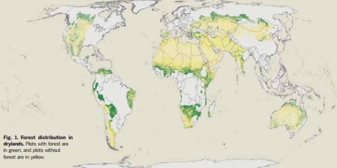 Répartition des forêts (en vert) dans les zones arides.