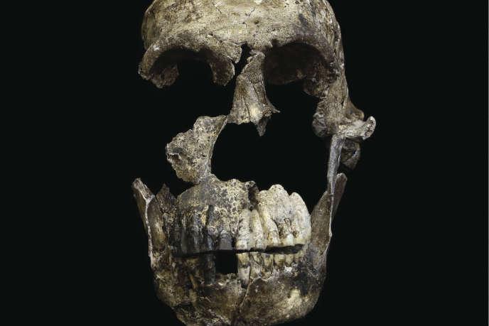 Vue de face du crâne du représentant de l'espèce «Homo naledi», baptisé Neo, trouvé dans une grotte sud-africaine.
