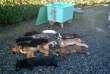 En février 2014, l'association Animal Cross pénètre dans les locaux de la SPA de Pau juste après l'exécution de 11 animaux.