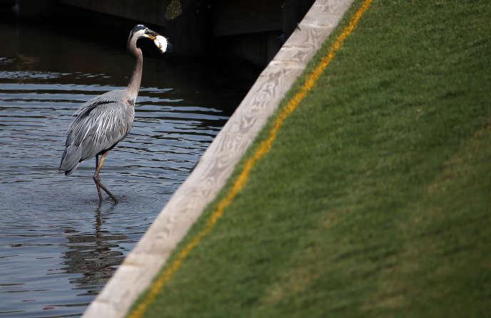 Les chercheurs ont utilisé les espèces d'oiseaux d'eau (les hérons par exemple) comme un baromètre de l'état de la biodiversité.