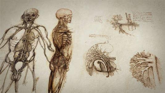 Planche représentant l'anatomie d'un corps.