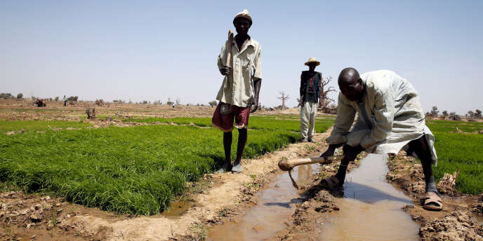 Des agriculteurs à Bauchi, dans le nord du Nigeria, en mars 2017.