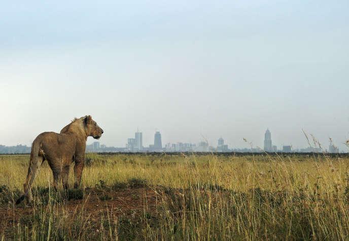 Le parc national de Nairobi, avec à l'horizon les tours qui se multiplient dans la capitale kényane.