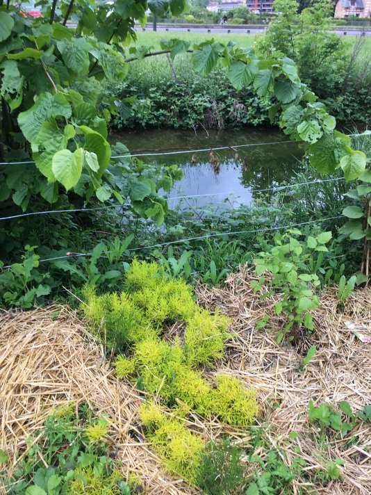 Plantations au bord d'une circulation d'eau.