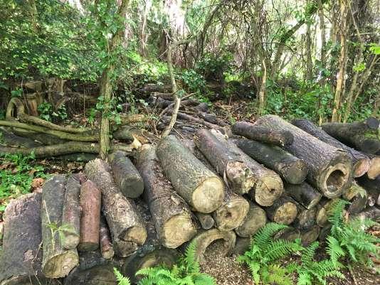 Ce tas de bois est un abri spécialement conçu pour les hérissons.