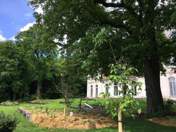 Des arbres fruitiers et des végétaux plantés dans un sol travaillé selon des principes inspirés de la permaculture.