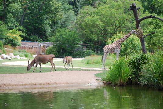 Au cœur du parc, trois hectares de« plaine africaine».