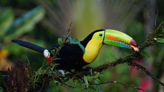 Et plus si affinités astrales... au Costa Rica.
