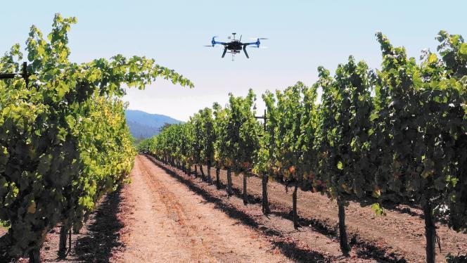Les vignobles Kunde Family, près de Santa Rosa en Californie, expérimentent l'utilisation de drones.